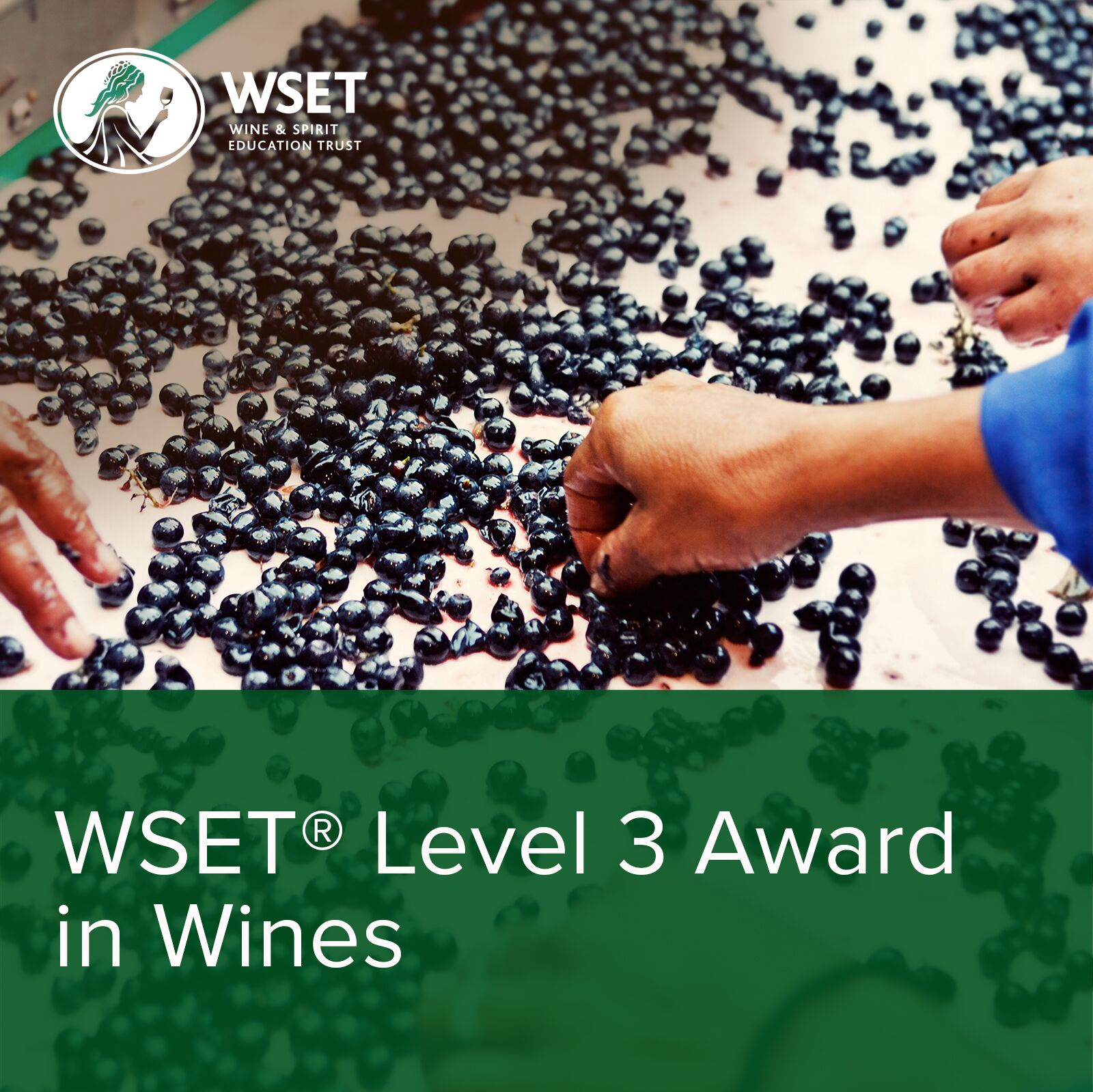 WSET Level 3 Wine Course